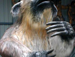 Foto: ausgestopftes Riesenfaultier in der Größe eines Bären