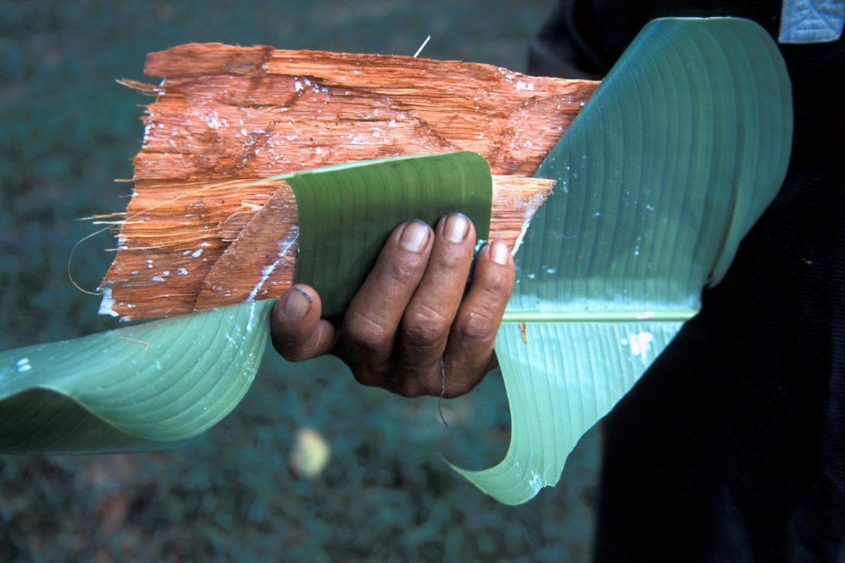Foto: eine Hand hält Baumrinde in einem Blatt