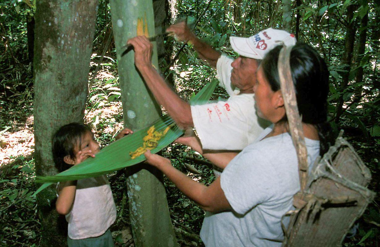 Foto: Mann kratzt Baumrinde in ein von einer Frau aufgehaltenes Palmenblatt. Kleines Kind schaut zu.