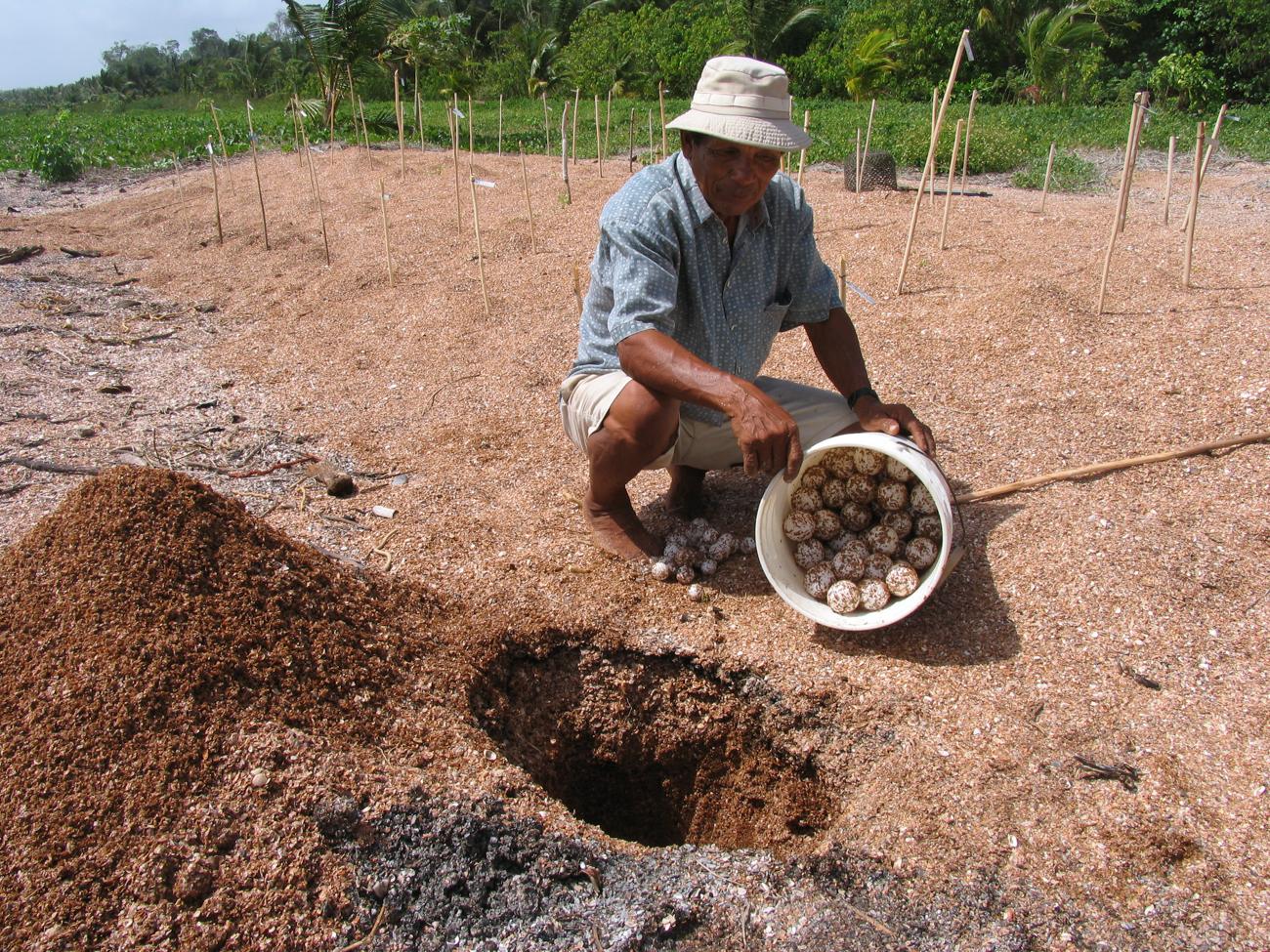 Foto: Mann kniet mit einem Eimer Schildkröteneier vor einem Loch