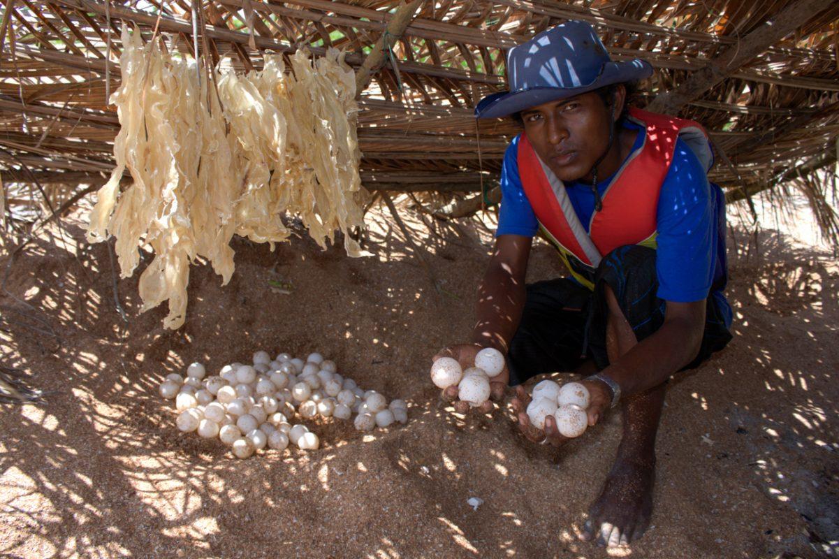 Foto: Mann kniet vor einer Sandmulde mit vielen Schildkröteneiern und hält auch welche in den Händen