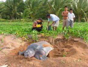 Foto: Gruppe von Mann, Frau und 2 Kindern. Riesenschildkröte im Vordergrund in einem Sandloch.