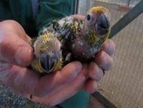 Foto: geschlossene Hände halten zwei Vögel